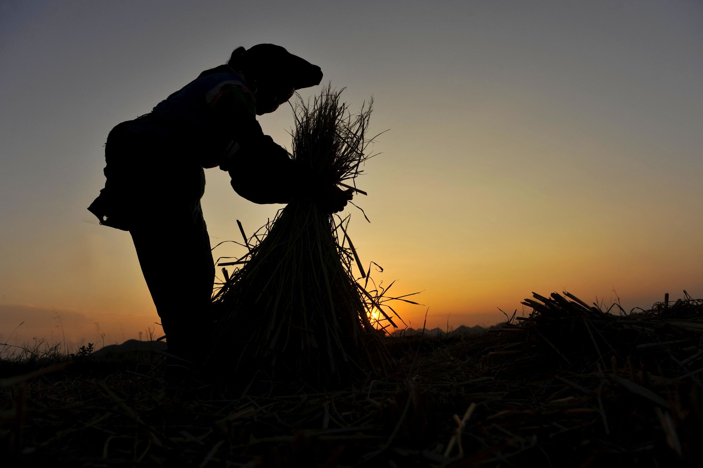 种地_随着机械化发展越来越快,农村不需要那么多农民种地了,只要几个有知识