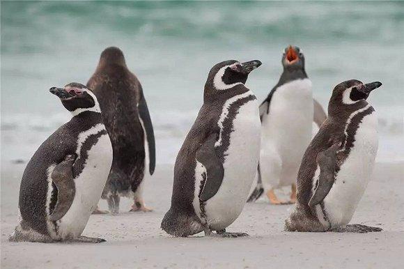 去南极看企鹅,才是打开2018春节的正确方式