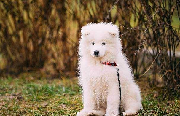 什么宠物狗最萌十大可爱的狗排名:你最喜欢哪一只