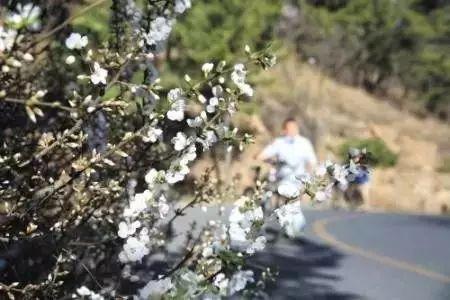 梨花花期10天左右,4月底,梨花的花瓣开始飞落,此时可以形成梨花飞雪