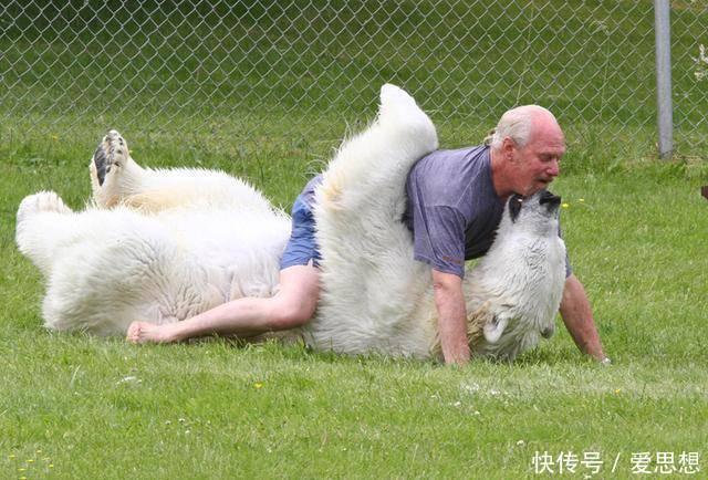 """64岁费用把北极熊年长""""哈士奇"""",16养成了700多斤2012大熊猫加拿大老人图片"""