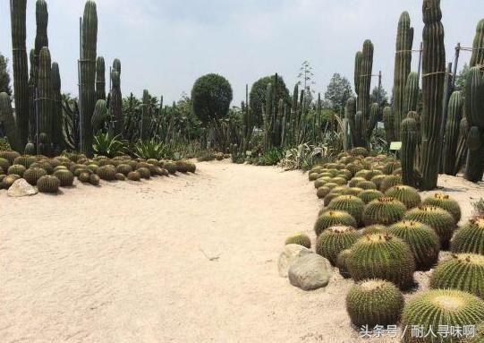 厦门园林植物园 喜欢看风景的,这个其实很推荐,植物园里景色很不错