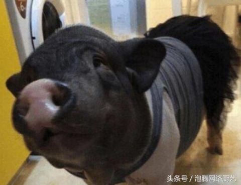 这是小猪小时候的照片,还是很可爱的吧.