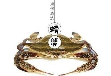 生活窍门:贝类,鱼虾,螃蟹,海蜇等七类海鲜的清洗方法