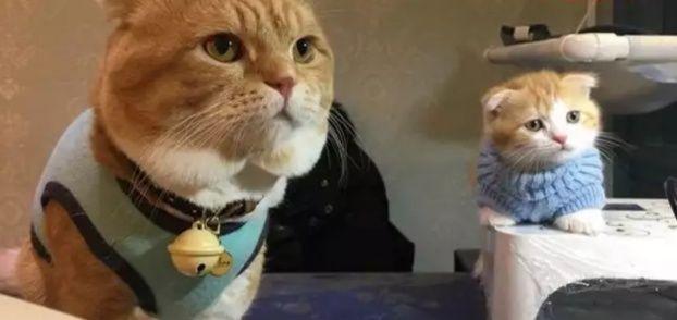 而是一副惹人怜爱楚楚可怜的模样 每次小猫咪到处玩儿的时候 猫咪