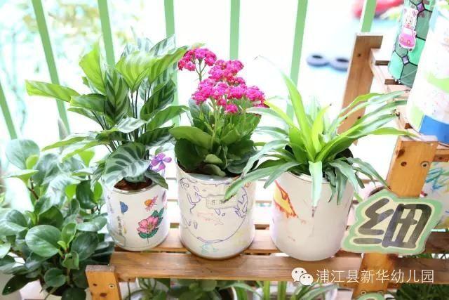 这些都是浦江新华幼儿园孩子们和爸爸妈妈,老师一起亲手制作的哦
