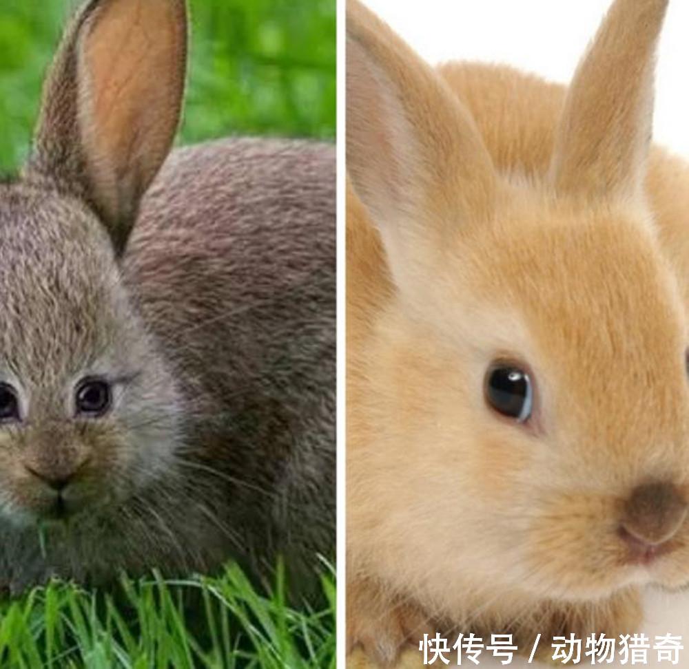 首先是兔子,当它的眼睛长到前面之后,一如既往的还是那么的懵眼睛滴