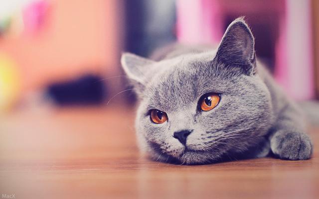 猫咪是一种看上去高冷又傲娇的动物,但是挡不住它萌啊,深受很多人的