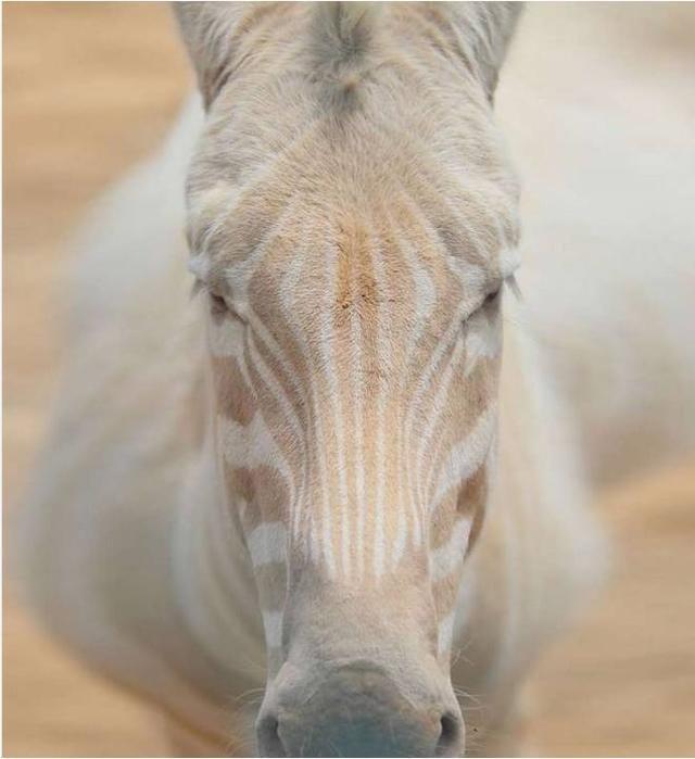 患上白化病的动物们,浑身苍白的神圣,最后那个是白素贞?