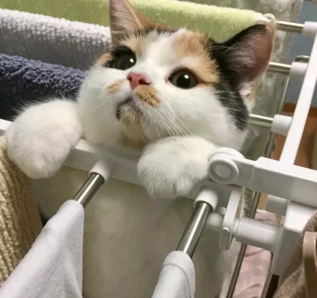 猫咪摆出一副委屈的表情:我不开心了,你也不哄哄人家,哼,100条小鱼干