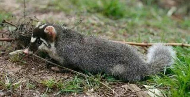 国家提倡保护动物,你知道农村有什么小动物 渐渐消失吗?