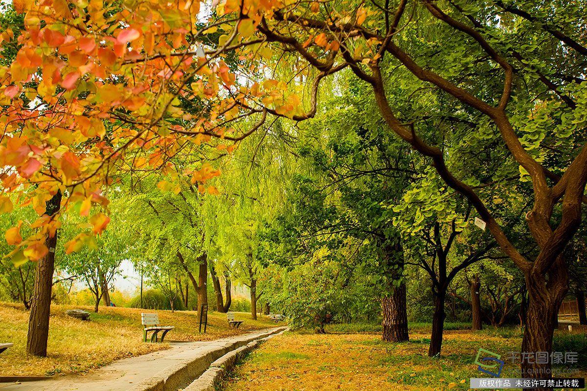 美丽北京好去处|北京植物园秋色醉人宛若画中