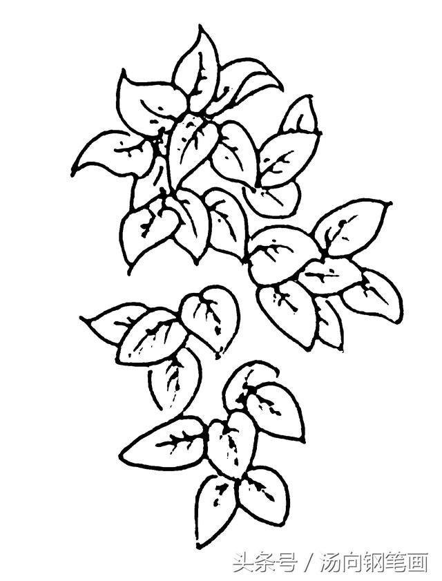 706草丛豆蔓 钢笔画零基础入门图文步骤详解教程