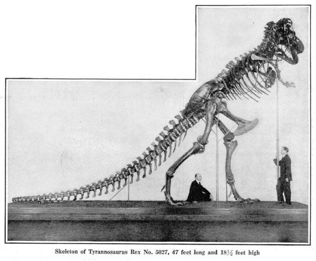 怎料这些巨大的骨头拼装难度非常大,他们无法把霸王龙拼成想象中的