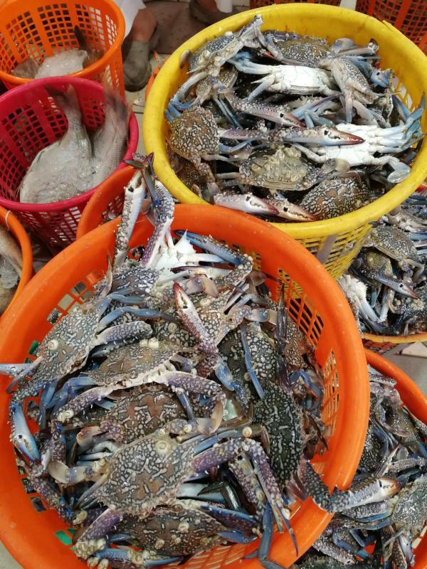 科威特特色海鲜市场--鱼市