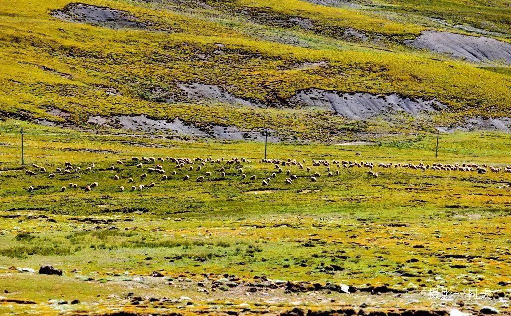 壁纸 草原 成片种植 风景 植物 种植基地 桌面 1024_634
