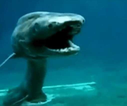 为什么深海的动物都长得那么面目狰狞?