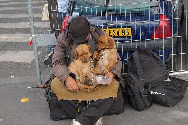 男子与狗狗一起流浪,不离不弃,接下来的动作很感人!
