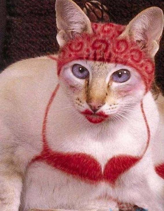 壁纸 动物 猫 猫咪 小猫 桌面 567_728 竖版 竖屏 手机