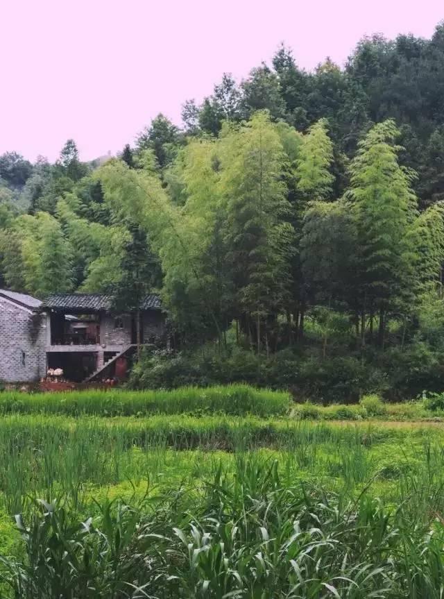 稻田风景头像图片男