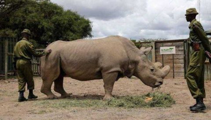 世界上最稀有动物,目前仅剩一只,40名特种兵日夜守护