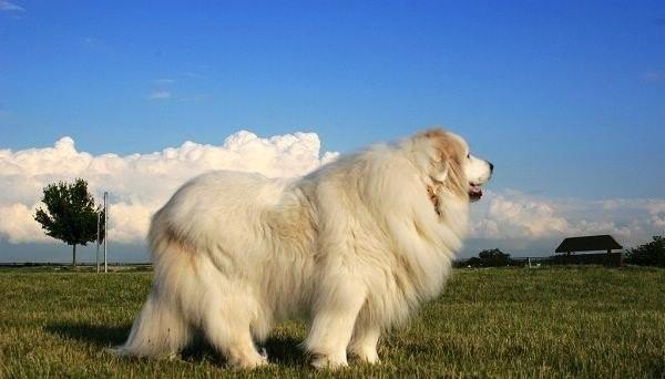 地球上10大最有气质的狗,第三种是伊丽莎白女王的最爱