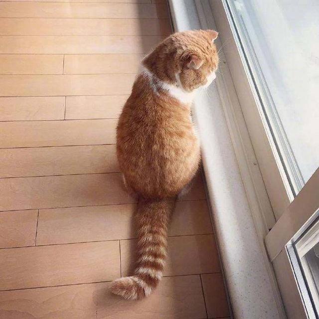 一只背影非常漂亮的橘猫,圆润可爱,网友:好想亲一口!