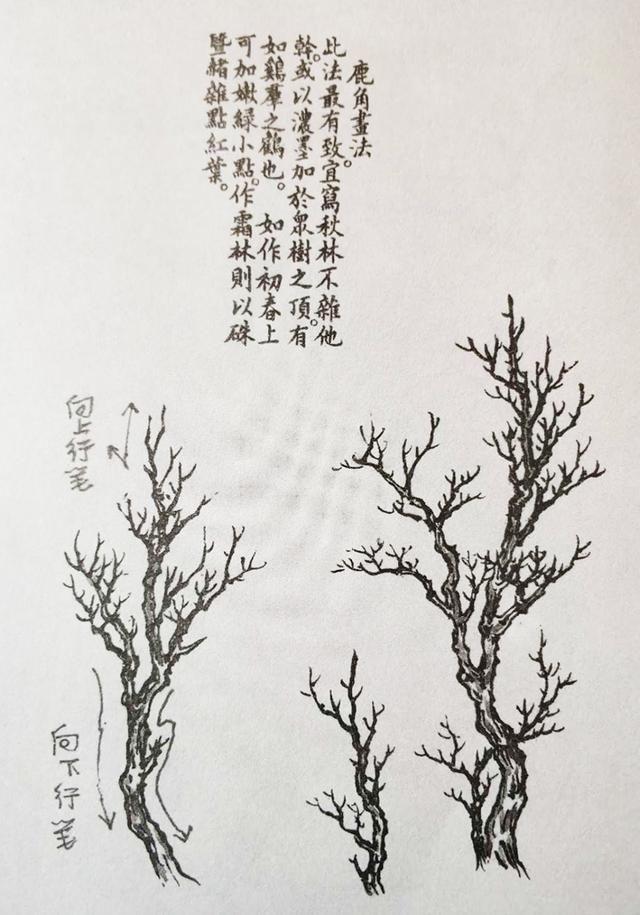 下面给大家介绍几种树枝画法: 鹿角枝