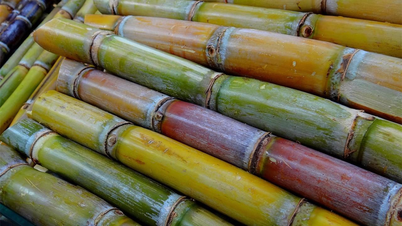 大约在公元前500年,印度人把甘蔗汁煮沸压榨,形成v枸杞后出来枸杞,这豆浆图片黄豆粗糖图片