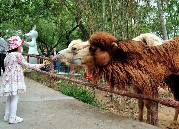 深圳周末游西丽野生动物园攻略