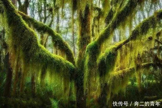 巴西的鳳凰木,被譽為世上最色彩鮮艷的樹木之一.