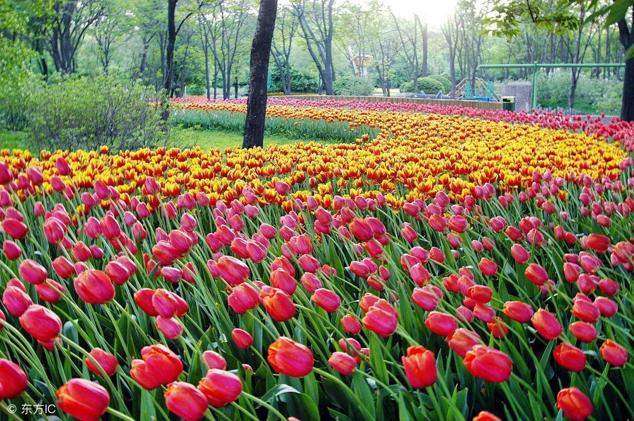 有花有草地的风景图片