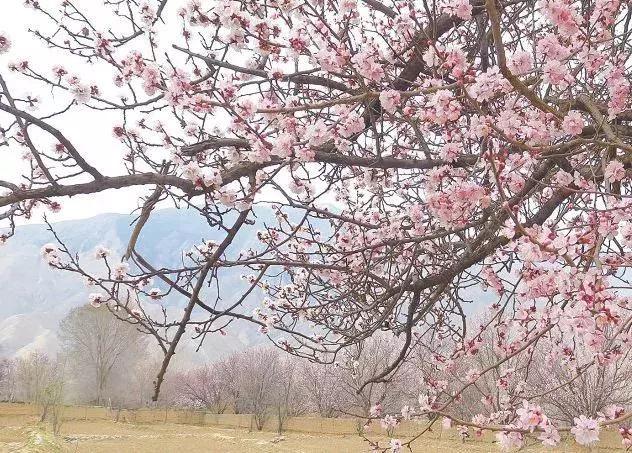 青海哪的春天来的最早,最美