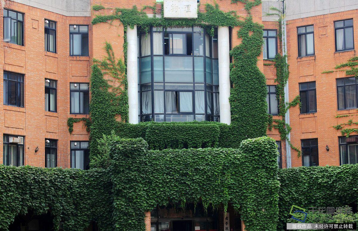 近日,在清华校园内教学楼,办公楼等多处建筑物上被爬山虎攀爬扮绿