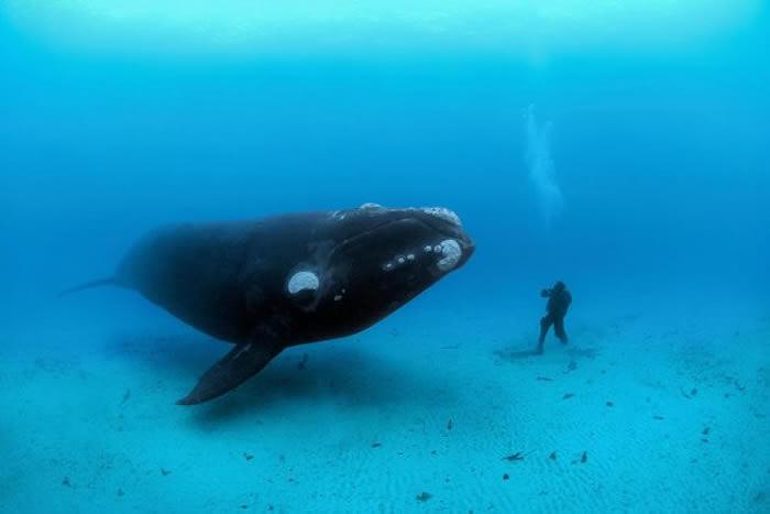 动物的体型可以很大,但如果想找的是地球上真正的巨兽,你得往海里找.