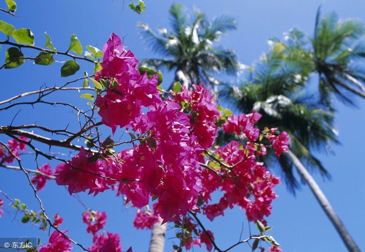 喜欢养花的朋友可以一边欣赏美丽的风景,一边学习养花技巧.