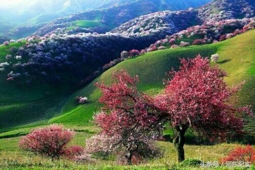 故乡的风景,永远是我心中最美的画卷!