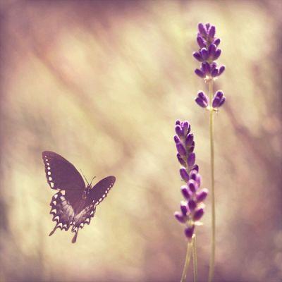 头像花草小清新自然_微信头像风景或花草紫色