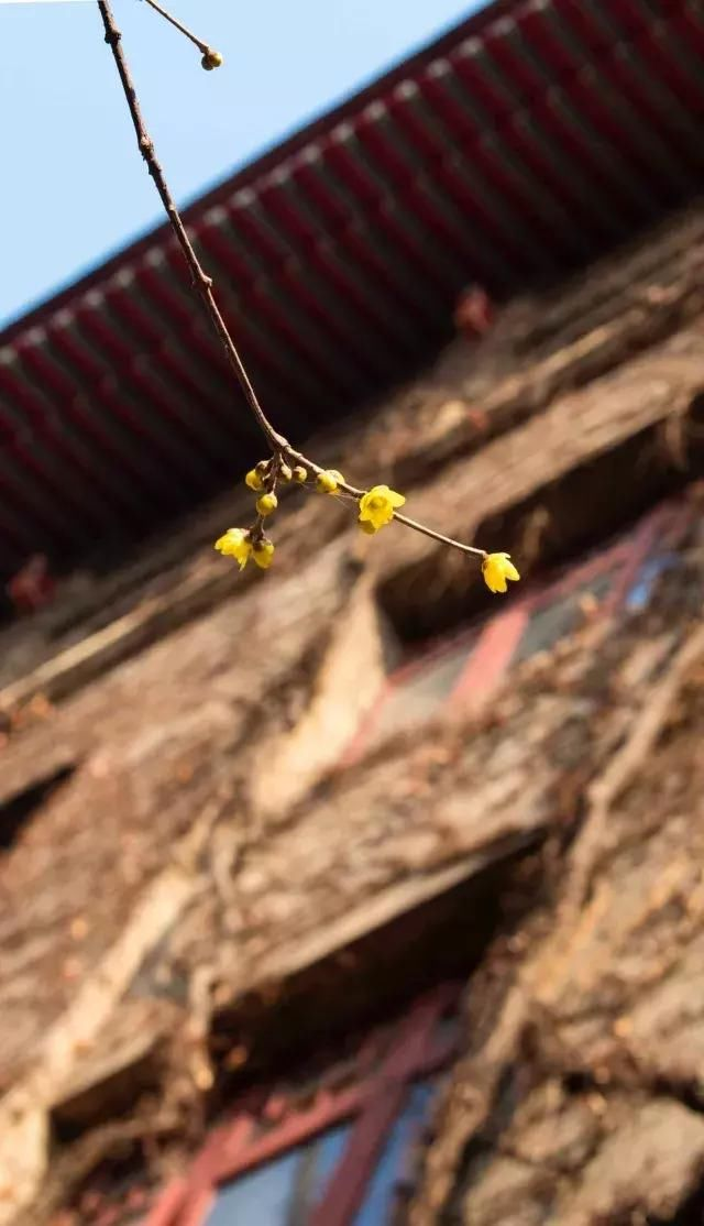 a气球美丽丁香花气球石楠繁花似锦牡丹娇艳欲滴蔷薇淡雅的格桑花花怪味怎么吹图片