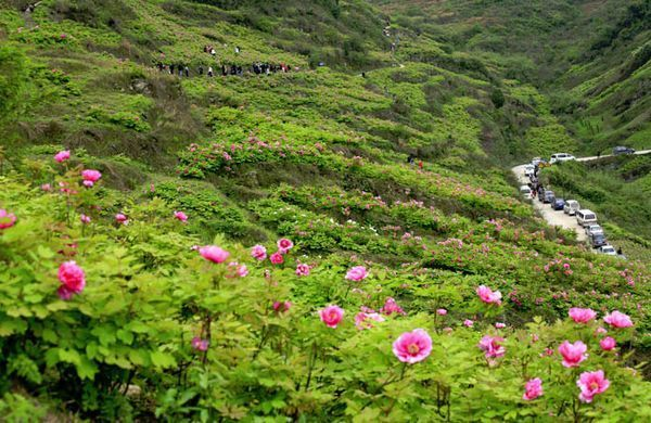 """景点:西山风景区,丫山花海石林,马仁山,小格里自然风景区 自古素有"""""""