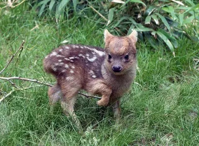你没见过的刚出生的珍贵动物宝宝,呆萌又可爱!瞬间萌化了