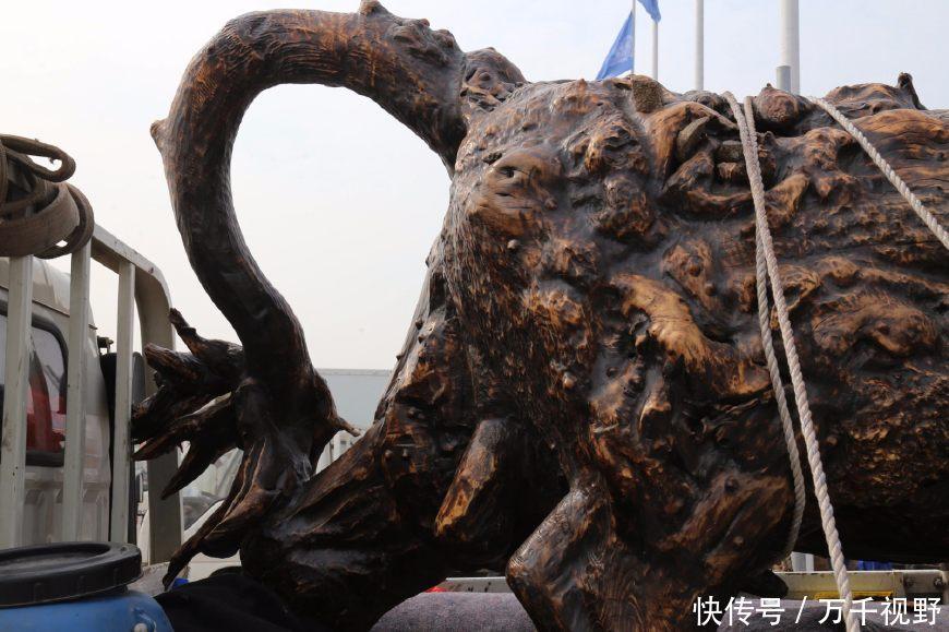 农村老汉深山挖到巨大树根,雕刻成老黄牛取名奋进,标价6万元