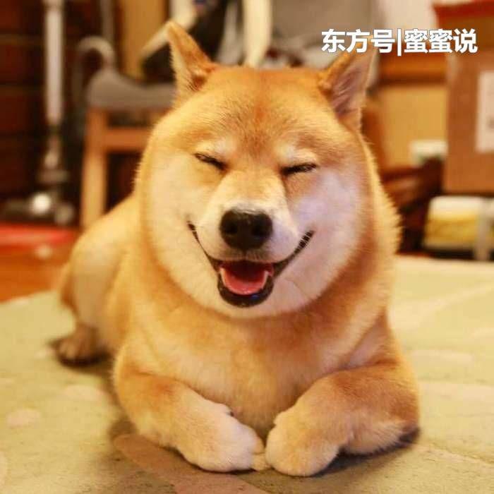 十二星座最喜欢养什么狗?