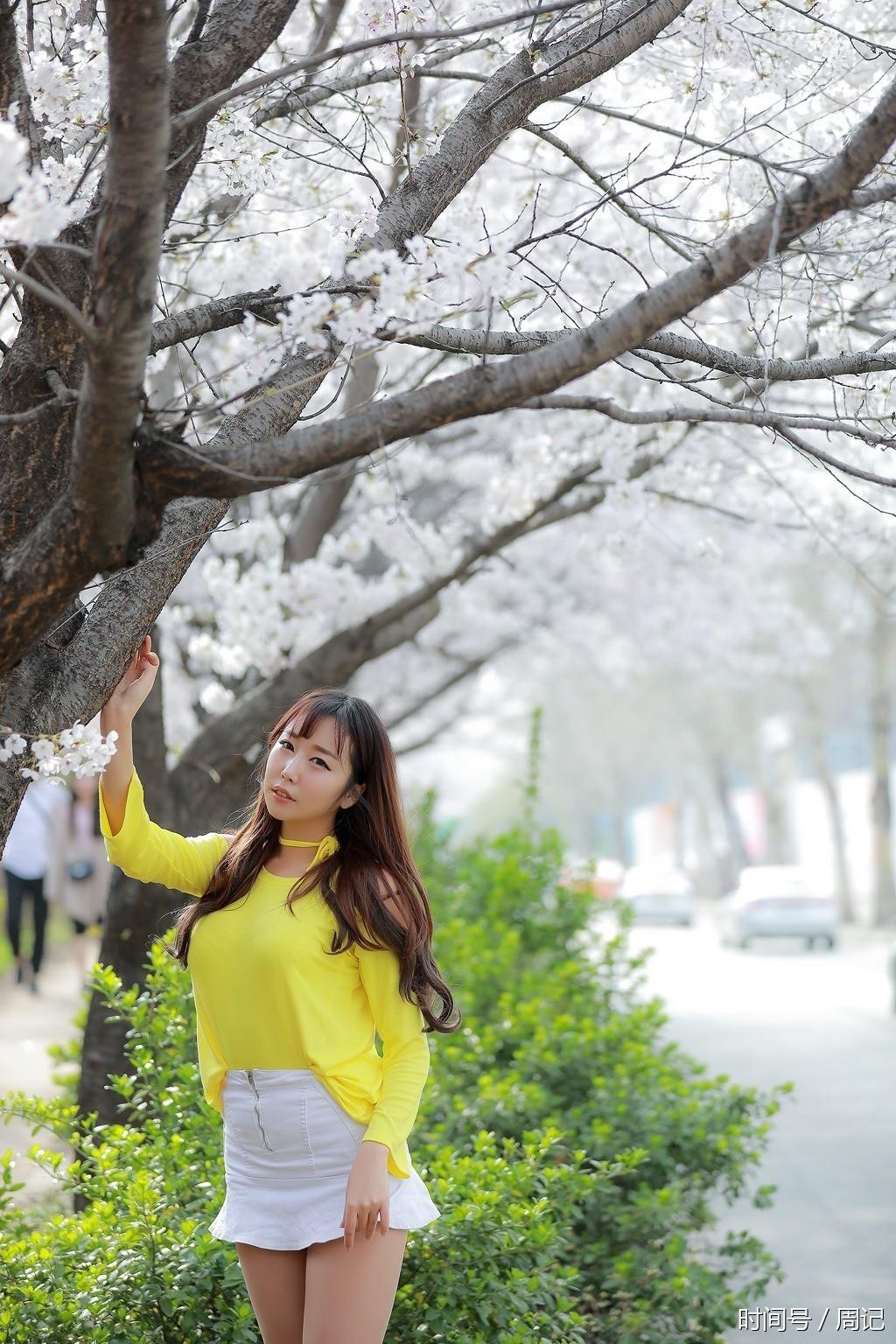 樱花树下的黄衣美女-樱花风景美姑娘也美