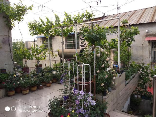 我的屋顶果园,花园,菜园,朋友们觉得美吗?图片