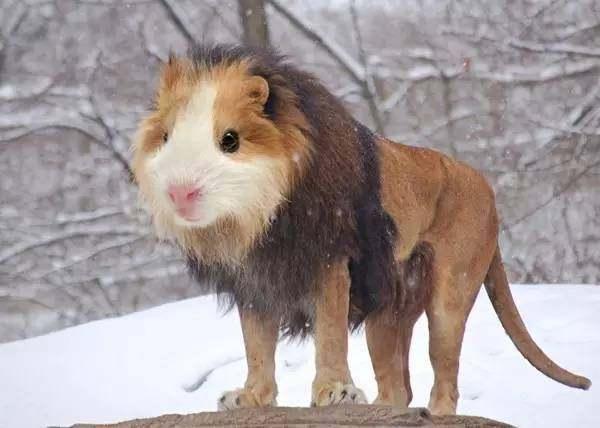 爆笑11张奇葩动物,这是什么动物?你能看出一个算你赢!