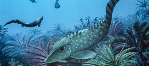 泥盆纪灭绝的动物种类包括:腕足动物门,三叶虫,菊石目,牙形石纲,无颌