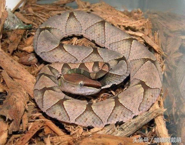 男子捡到小蛇,本想当宠物养,得知品种后吓得连忙放生!