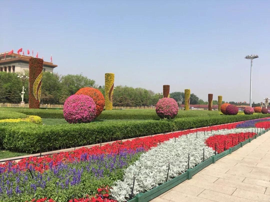 小长假期间,天安门广场将再现花团锦簇的盛况。 北京日报(ID:Beijing_Daily)记者获悉,随着15万盆鲜花上岗,天安门广场五一花卉布置已正式完工。 施工方北京城建集团所属园林集团花木公司相关负责人透露,这次天安门摆花是从4月21日进场,历经5天紧张施工,为的是让广场焕然一新,营造出欢乐喜庆的节日气氛。 今年五一,天安门广场将变成什么样? 小编带您抢先看    这位负责人介绍,此次花卉布置运用非洲凤仙、四季海棠、角堇、一串红等十余种花卉,对广场东西两侧各9个花球和6根火纹花柱以及北四坛的花卉
