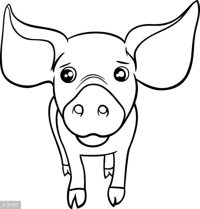 金猪简笔画步骤